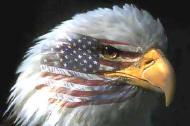 eagle190.jpg