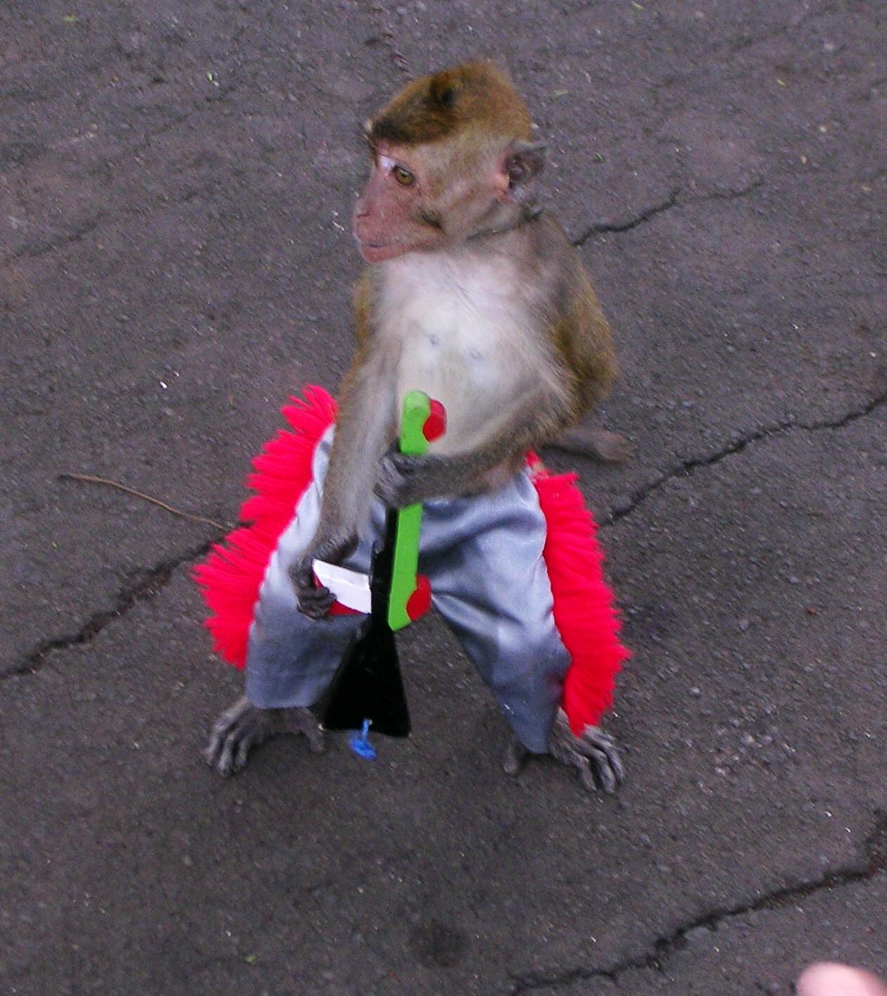 monkeyipsi.jpg
